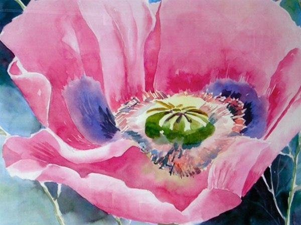 Abiquiu Poppy - watercolor by Ed Fenendael