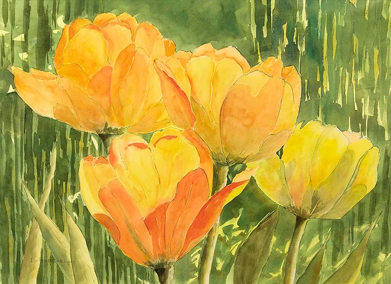 Springtime Tulips - watercolor by Ed Fenendael