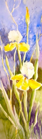 Yellow Irises - watercolor & ink by Ed Fenendael