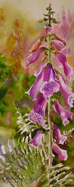 Foxglove Ferns - watercolor by Ed Fenendael