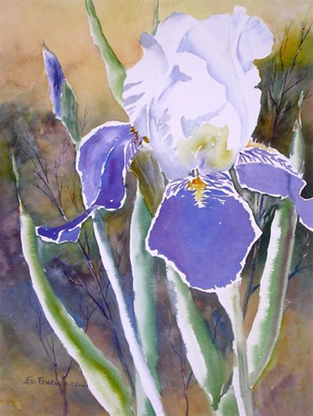 Iris Blue White - watercolor by Ed Fenendael