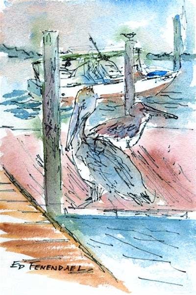 Pelicans - Cortez, FL - Print