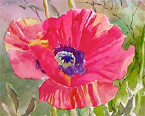 Watercolor flower by Ed Fenendael